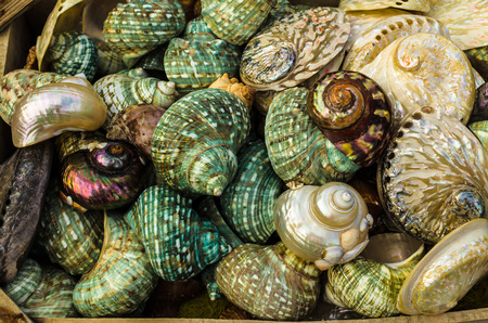 GREECE - November, 2017: beautiful, bright, colorful, pearl, seashells, occupying the whole field of view ,. Selective focus Editorial