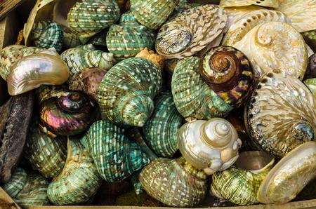 GRIEKENLAND - November, 2017: mooi, helder, kleurrijk, parel, zeeschelpen, die het hele gezichtsveld bezetten,. Selectieve aandacht