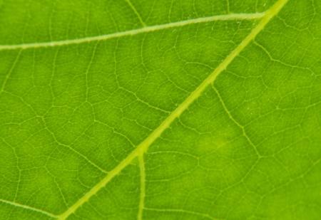 macrophoto: texture of leaf Stock Photo