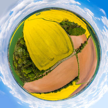Panoramatic planet of yellow rapeseed field with split parts of fields with groves Reklamní fotografie