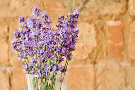 Bouquet of fresh purple lavender in a glass vase on the brick wall background. Closeup