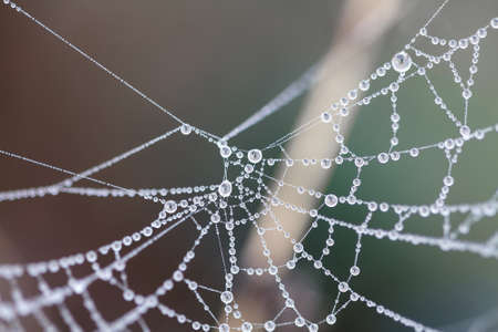 Cobweb in dew drops. Rain drops on a spiderweb. Abstract background for halloween