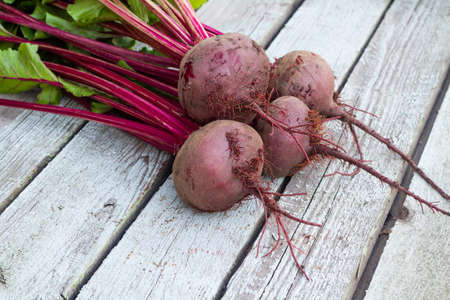 Fresh organic beet, beetroot on the gray rustic wooden background. Closeup, selective focus