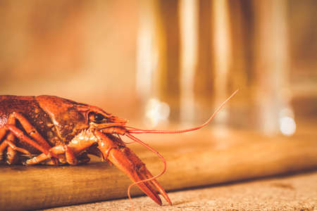 Boiled red crawfish on the wooden surface against a mug of beer background. Closeup, selective focus, toned,