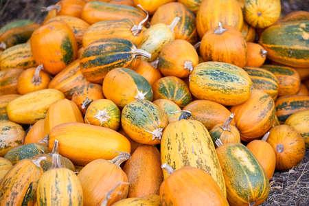 Pile of orange pumpkins at outdoor farmers market Stock fotó
