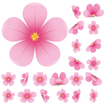 japan culture: Cherry blossom, flowers of sakura, set, pink, flowers collection, Illustration