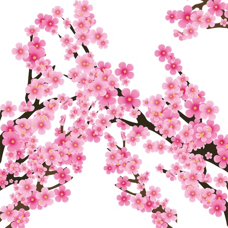 sakura flowers: Cherry blossom, flowers of sakura, tree brunch, spring background Illustration