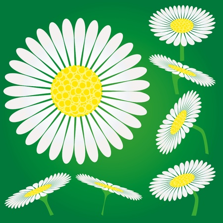 ox eye daisy: Set of Chamomile flowers, camomile isolated on green background, vector illustration