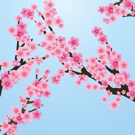 kersenbloesem: Cherry blossom, bloemen van sakura, boom brunch, blauwe hemel, spring achtergrond, vector illustratie Stock Illustratie