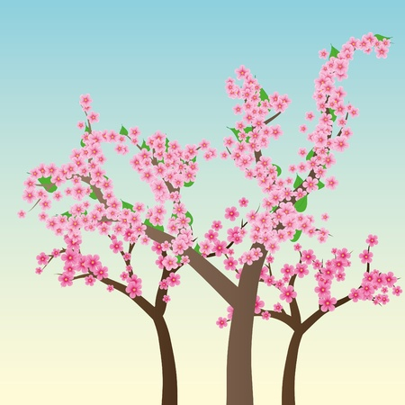 cherry blossom tree: Cherry blossom, flowers of sakura, tree branch, blue sky, spring background,vector illustration