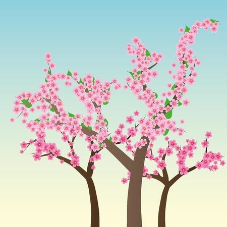 cherry tree: Cherry blossom, flowers of sakura, tree brunch, blue sky, spring background,vector illustration