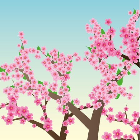 Spring or summer background with cherry blossom, sakura trees, vector illustration Vector