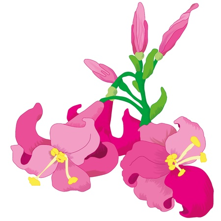 fragrant bouquet: lilies flower  Illustration