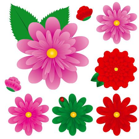 gerber daisy: Big Colorful Gerbera Flowers Set, Vector Illustration, Gerbers