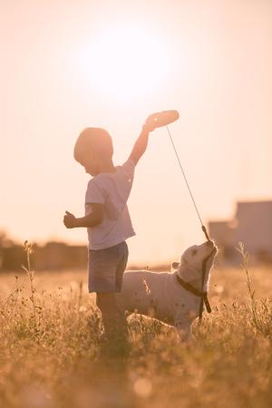 obedecer: Niño del muchacho joven Formación de oro del perro de perrito del perro perdiguero en una pradera en día soleado