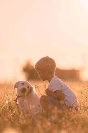 iluminado a contraluz: Niño del muchacho joven Formación de oro del perro de perrito del perro perdiguero en una pradera en día soleado