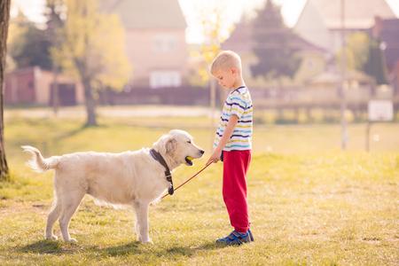 Child Training Labrador Dog Golden Retriever in Park