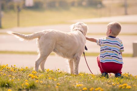obey: Formación niño perro labrador golden retriever en el parque Foto de archivo
