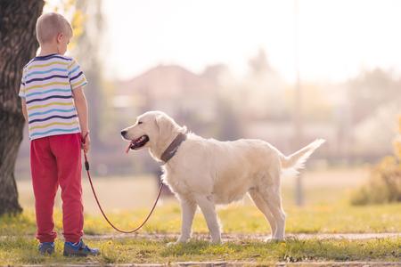 obey: Child Training Labrador Dog Golden Retriever in Park