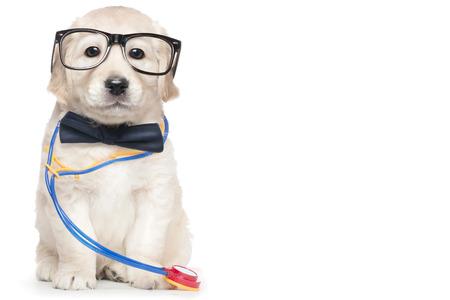 boca cerrada: Cute Puppy Lentes Veterinario del estetoscopio del doctor corbata de lazo cerrado elegante Boca