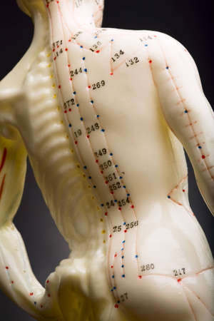 Mannequin used to demonstrate acupuncture showing spine Stock Photo