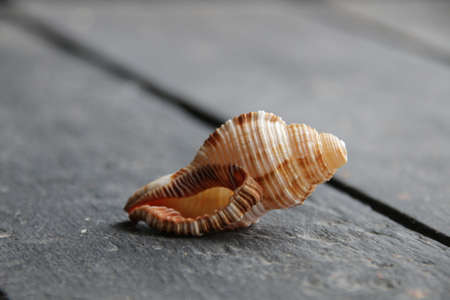 The seashell lies on a vintage table. Summer vacation concept.