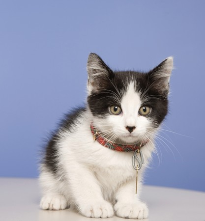 Young kitten in a foster program until he's old enough for adoption.  About 5-6 weeks old here. Stock Photo - 8032564