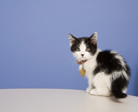 Young kitten in a foster program until he's old enough for adoption.  About 5-6 weeks old here. Stock Photo - 8931591