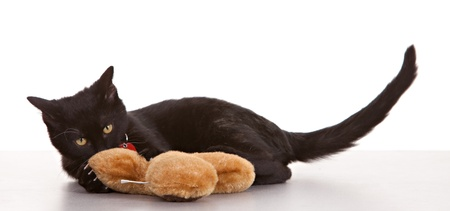 Black cat on white background wearing collar and tag Stock Photo - 10713652