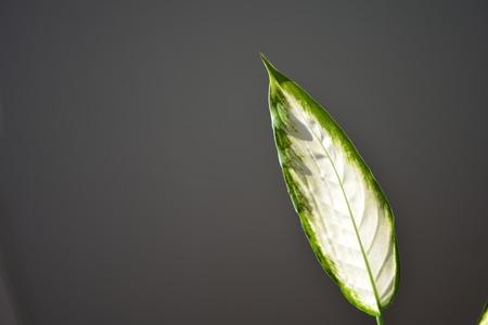 Sunlight illuminates a green leaf Reklamní fotografie
