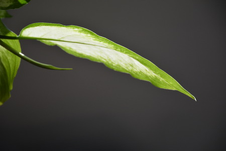 Sunlight through green leaf Reklamní fotografie