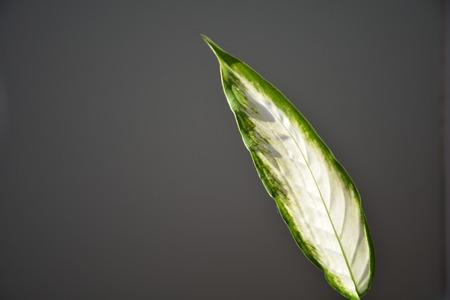 Sunlight illumines a green leaf
