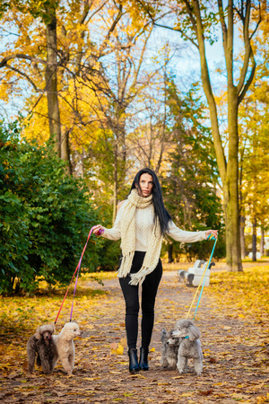 portrait of a beautiful young girl in fashionable business clothes walking along an autumn park with 4 dogs of mini poodle Archivio Fotografico