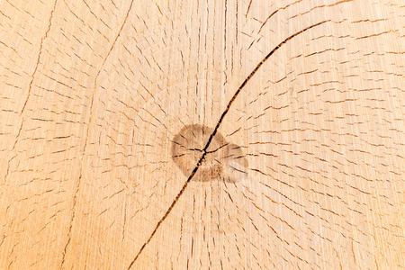 Sezione trasversale di un tronco d'albero e ceppo. Struttura di legno. Taglio rotondo con anelli annuali Archivio Fotografico - 98085946