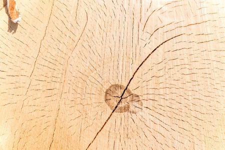 Sezione trasversale di un tronco d'albero e ceppo. Struttura di legno. Taglio rotondo con anelli annuali Archivio Fotografico - 98201320