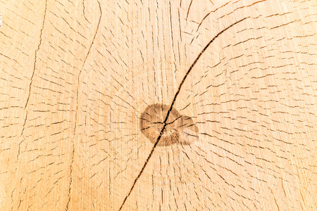 Cross section of a tree trunk and stump. Structure of wood. Round cut with annual rings Archivio Fotografico