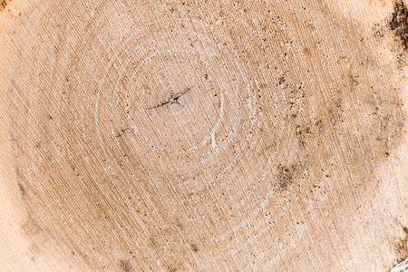 Sezione trasversale di un tronco d'albero e ceppo. Struttura di legno. Taglio rotondo con anelli annuali Archivio Fotografico - 98085947