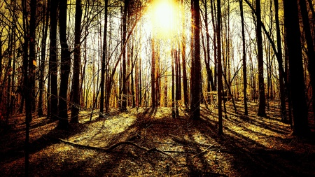Shadowy dark woods with a golden sun shining through the trees. Stock Photo