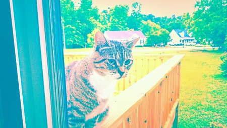 Color pop filtered Tabby cat sitting at the window looking inside. Stock Photo