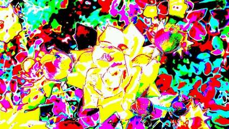 artistic: Bright abstract multicolored roses closeup in a flower garden.