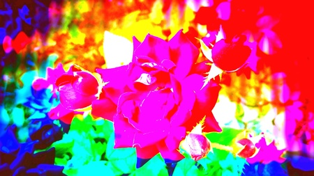 artistic: Bright abstract roses closeup in a bold color design.
