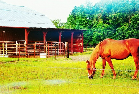 artistic: A brown horse is grazing near a barn. Color filtered.