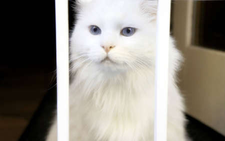 White Cat in Jail