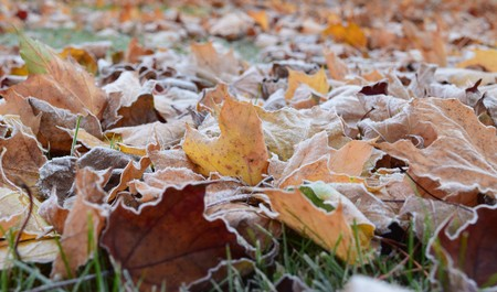 close-up frosty leaves