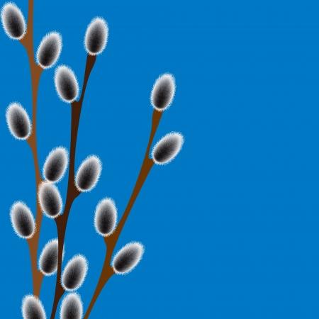 silky velvet: willow branches