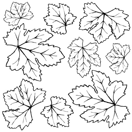 Autumn leaves vector set Vector
