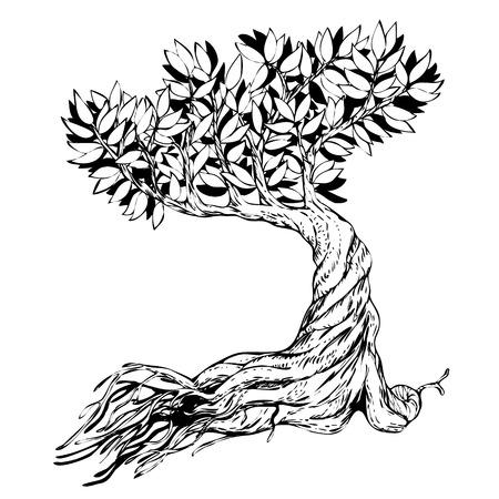 bonsai tree: Sketched bonsai tree