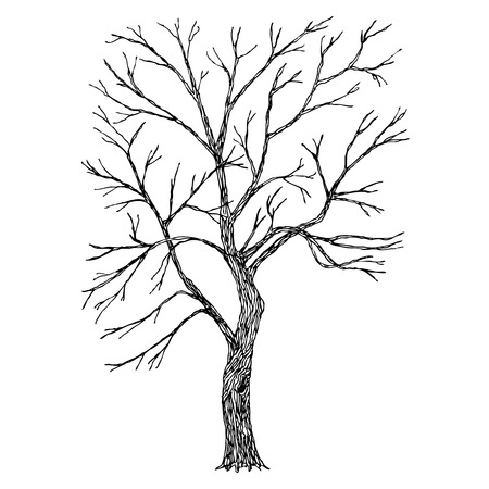 Albero. Vector. Sketched