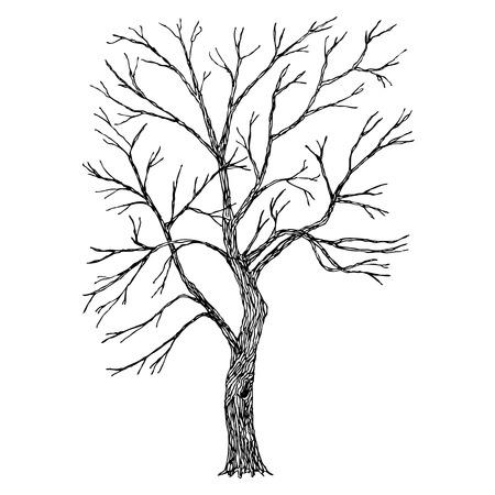 Baum. Vector. Skizziert