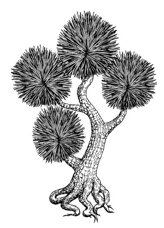 bonsai tree: Sketched bonsai tree. vector
